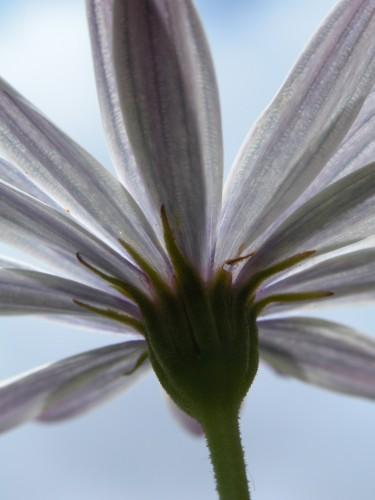 flower©V. Cocchi-11