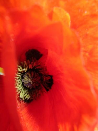 flower©V. Cocchi-2