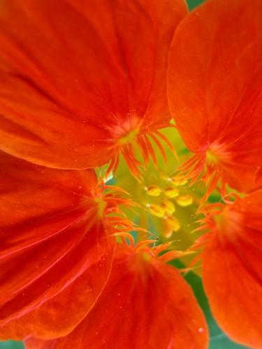 flower©V. Cocchi-5