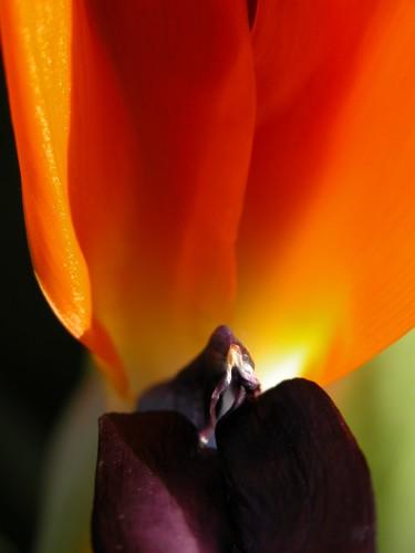 flower©V. Cocchi-7