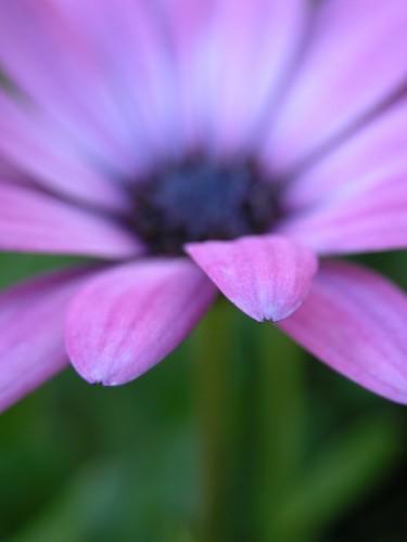 flower©V. Cocchi-9